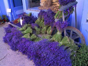 Lavender day tour in Provence with art and tours