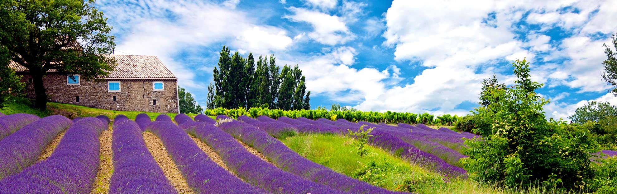 lavender provence tour from french riviera