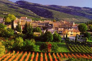 Provence Tour, local vineyards