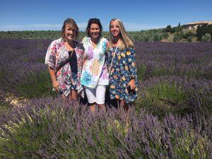 lavender, roses fields in the season